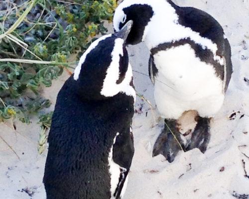 3. pinguins